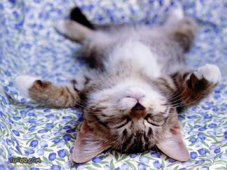 medium_cat_sleeping
